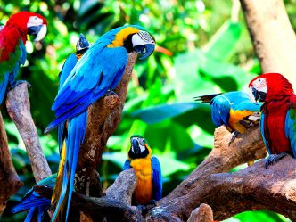 Colorful-Parrots-Wallpaper-01